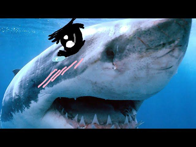 KAWAII SHARKS!