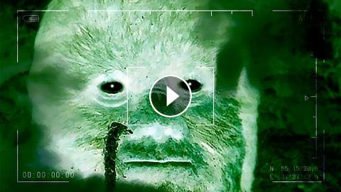 WE'RE GONNA CATCH BIGFOOT