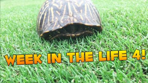 Week In The Life of Jerome: NEW TURTLE FRIEND! #4