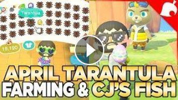 April's Tarantula Farming, CJ's Fish, & Expanded Zen ...